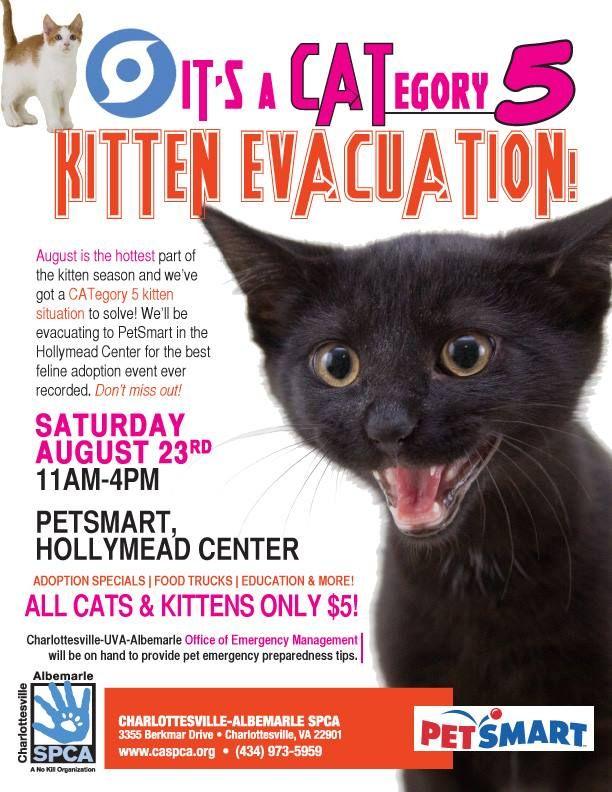 Great Kitten Adoption Poster! Pet Adoption Marketing