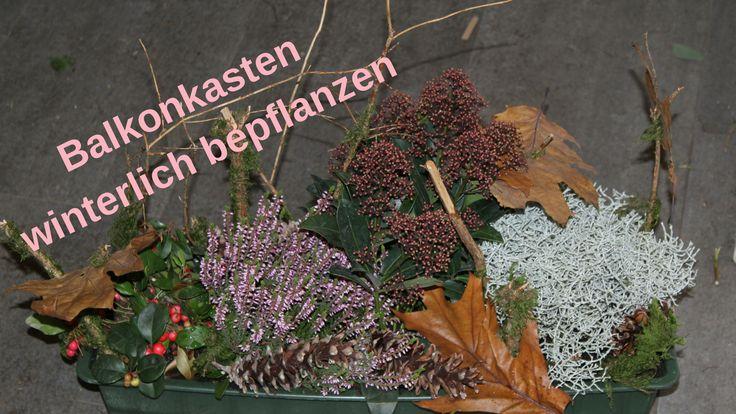 diy balkonkasten winterlich bepflanzen nat rlich. Black Bedroom Furniture Sets. Home Design Ideas