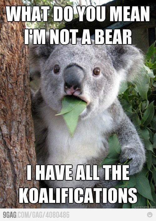 It's true...not a bear....