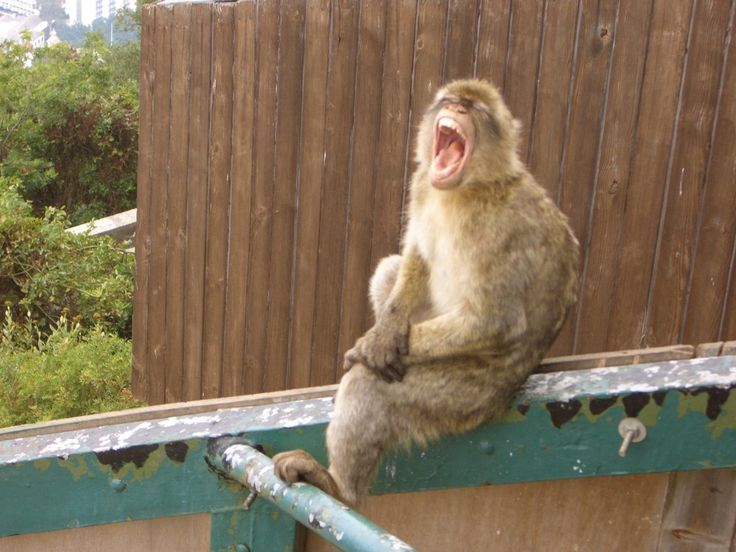 'One Monkey Don't Stop No Show' The Rock of Gibraltar and Seville, Spain