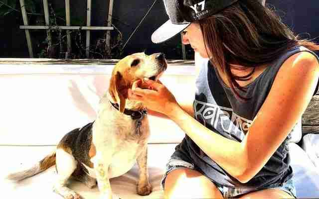 Meghan Markle Took This Dog From Shelter Pup To Royalty Beagle