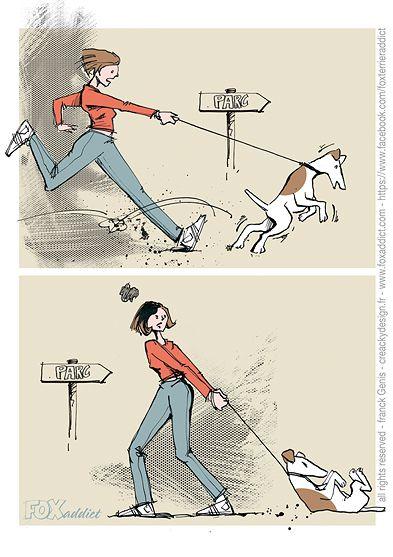 FOXaddict | Enjoying walkies with a fox terrier / Le plaisir des balades avec un fox. Un fox terrier peut aider à la pratique d'une activité physique régulière. Tonifier les jambes à l'aller, muscler les bras au retour. lol