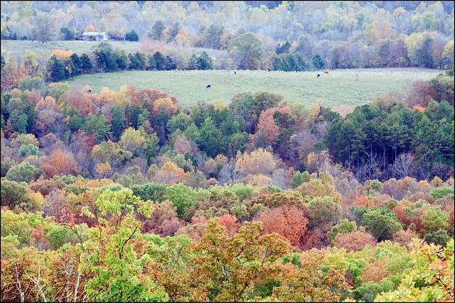 The Missouri Ozarks by Ozark Bill, via Flickr