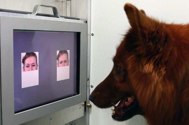 Gatti & Cani di Casa: A me gli occhi, please...