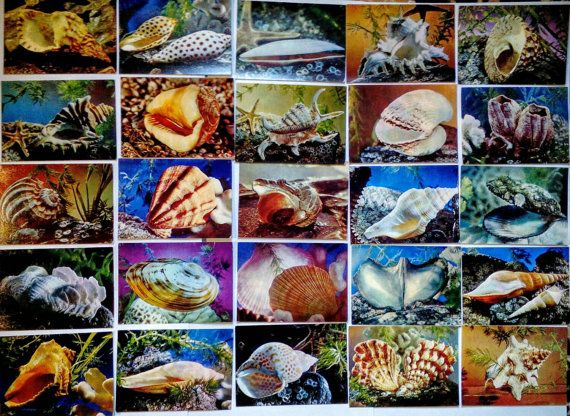 Shells  Ocean Life   Set of 25  Russian Vintage by LucyMarket