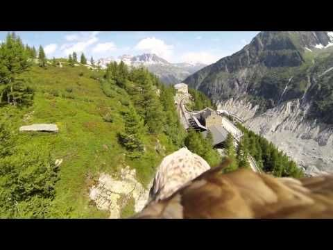 ▶ Go-Pro strapped to the back of an Eagle in France