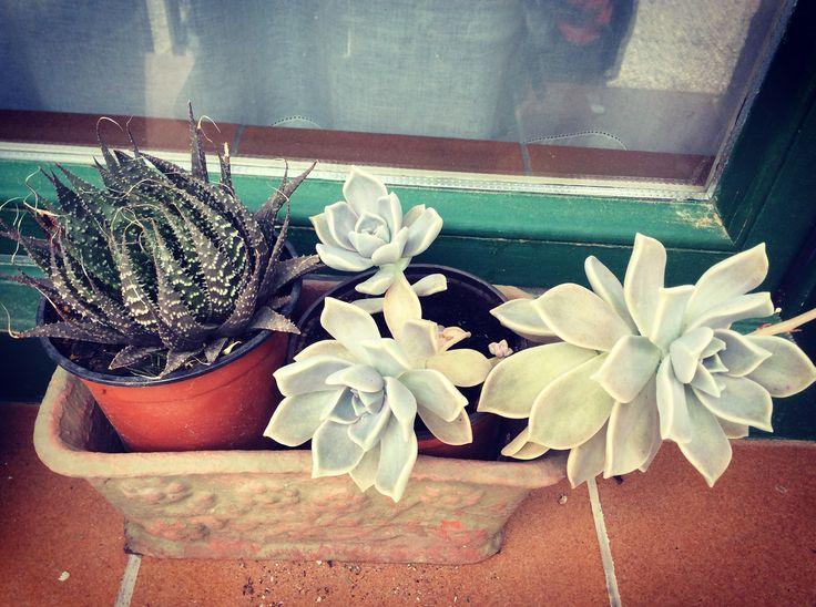 mejores 43 imágenes de cactus en pinterest | cactus, suculentas y