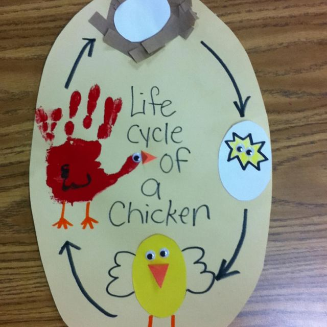 Life cycle of a chicken. They loved doing it.