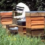 Beekeeping in the summer