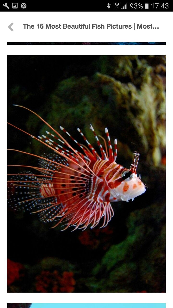 4946 best fish images on pinterest board colors and animal
