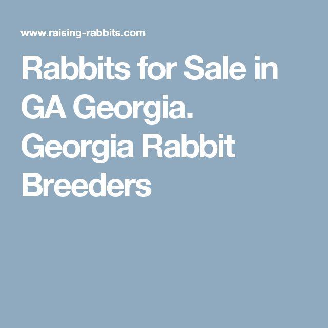 Rabbits for Sale in GA Georgia. Georgia Rabbit Breeders