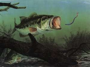 Bass Fishing!: Fishin 3, Bass Fish Pictures, Demo Bassfishingtackl, Nice Paintings, Art Bass, Fish Art, Fishin Art, Fishin Prints, Bass Fishin