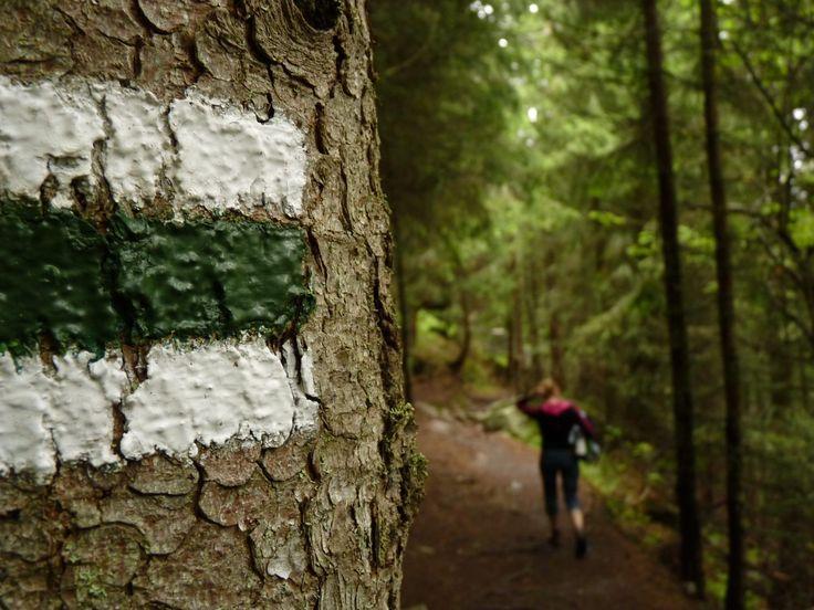 Przeczytaj w jaki sposób oznaczane są szlaki turystyczne - czy kolor ma znaczenie, a jeśli tak to jakie oraz jak najłatwiej zaplanować wędrówkę.