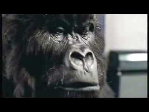 Gorilla Phil- i can feel it coming in the air tonight