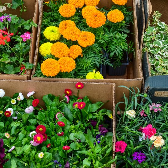 """""""Be Your Own Boss: How to Start a Mail-Order Nursery"""" This article covers the types of products you may want to sell if you start a mail-order nursery, your potential customer base, delivery details and more. From MOTHER EARTH NEWS magazine."""