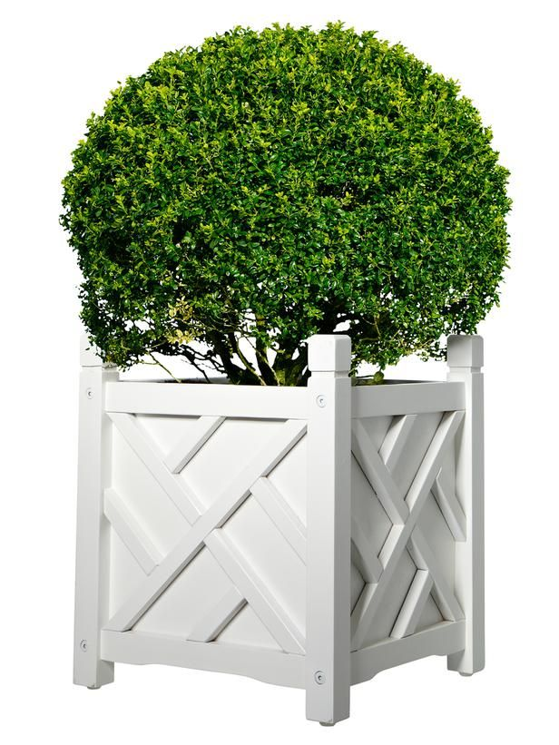Flank your front door with matching pots like this Chippendale planter ($57, each) with boxwoods #hgtvmagazine http://www.hgtv.com/landscaping/curb-appeal-upgrades/pictures/page-16.html#?soc=pinterest
