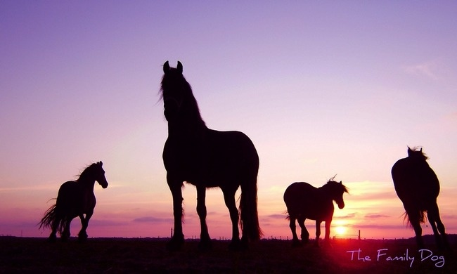 <3 Friesians silouette