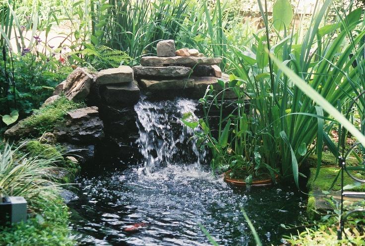 43 best goldfish pond images on pinterest backyard ponds for Outdoor goldfish pond