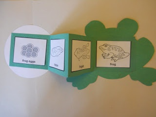 Frog Life Cycle Book - start with the egg, open the book to see the stages of development, and end with a frog on the other side.