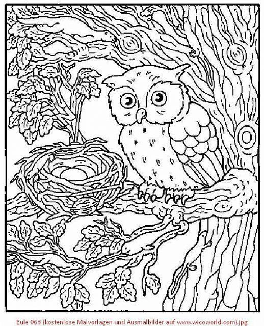 814 best coloring owls images on pinterest owls barn. Black Bedroom Furniture Sets. Home Design Ideas