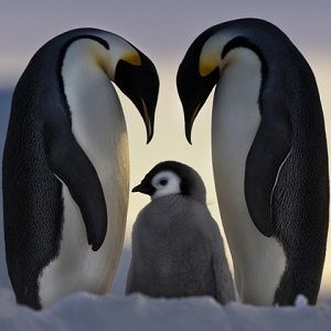 Penguin Facts - http://interesting-facts.com/penguin-facts/