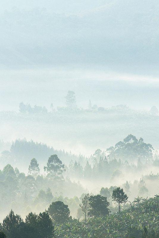 misty hills near Queen Elizabeth National Park.Uganda