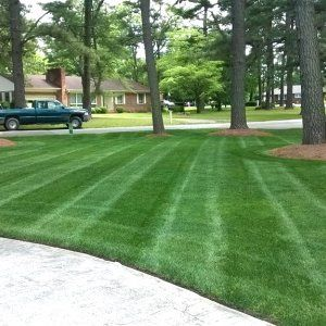 a lush green lawn like this is possible if you properly mow fertilize and - Lawn Treatment