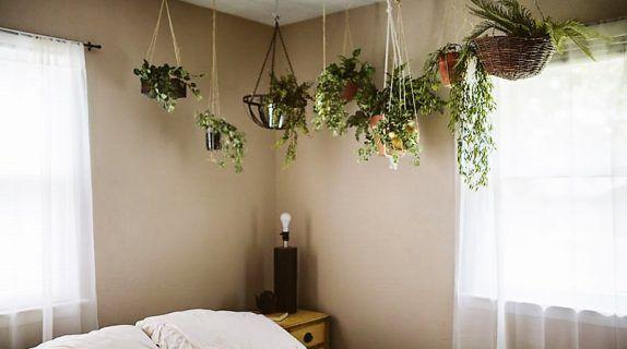 Piante da interni o camera da letto