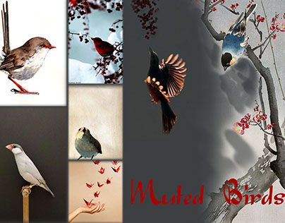 "Check out new work on my @Behance portfolio: ""muted birds"" http://on.be.net/1DArShC"