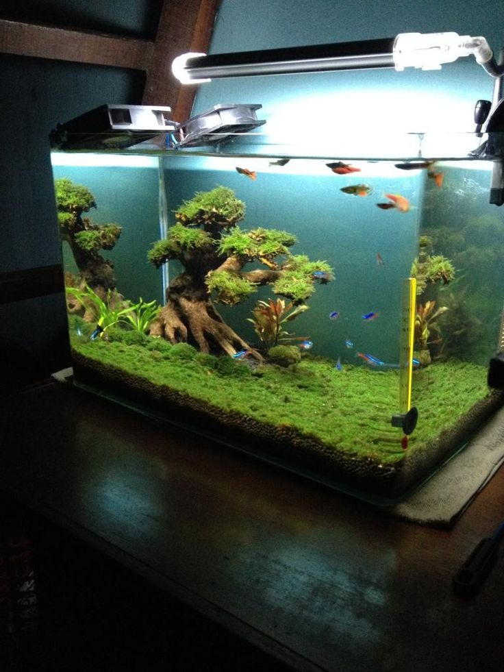 Add rocks to decorate your Aquarium perfectly. Get here - How to prepare the rocks for use in an aquarium.