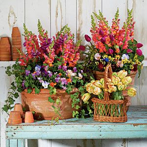 pretty: Plants Can, Gardens Ideas, Spring Flowers, Container Gardens, Southern Living, Pots Benches, Front Porches, Pennies Viola,  Flowerpot