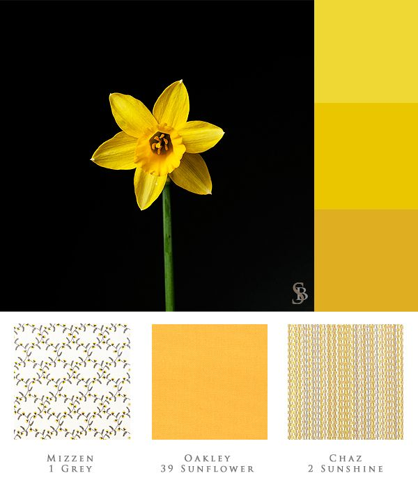 Daffodil Is The Flower Of March Did You Know That Daffodils Contain Sap That S Often Poisonous To Other Plants If You W With Images Flower Vases Daffodils World Of Color