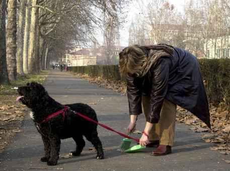 Signora bastonata da un pensionato perché non raccoglie i bisogni, folle gesto a Napoli In una normale giornata di inverno camminando con l'amatissimo cane sul lungomare di Napoli, una signora di età 75 mai si sarebbe aspettata di essere prima insultata senza mezzi termini e successivam #cani