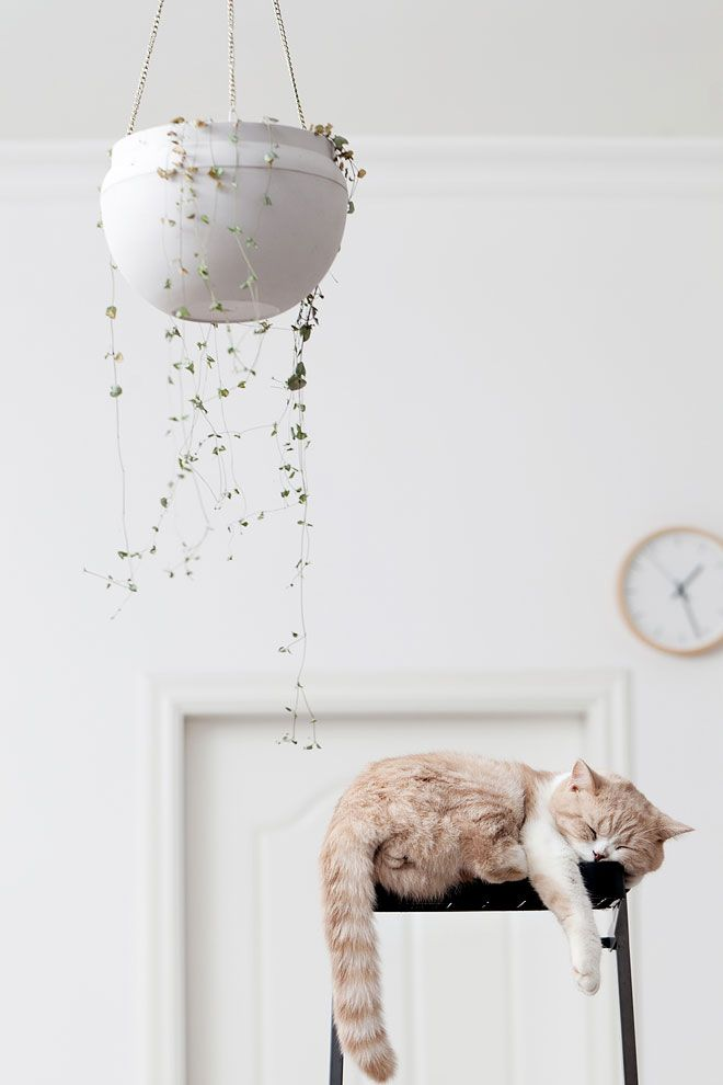 What's a home without a pet?  Miss Moss : Catch Up: Spaces