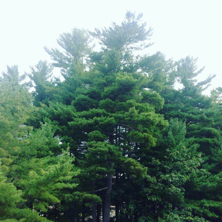 University of Maine  Orono, Maine 2015 Photo by Enya Calibuso