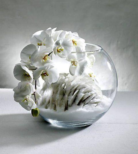 Image - orchidea na zimowo - Szczęscie to coś do zrobienia, ktoś do kochania i ... - Skyrock.com