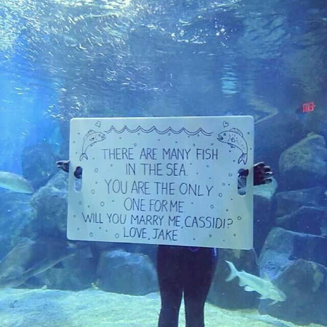 Underwater Proposal Some People Will Go To Great Lengths Surprise Their Significant Other In This Case Jake Actually Got Into An