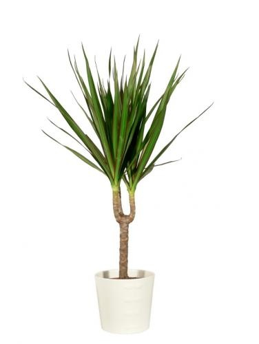 1000 ideas about indoor tropical plants on pinterest tropical house plants plants indoor and - Indoor plants for shade ...