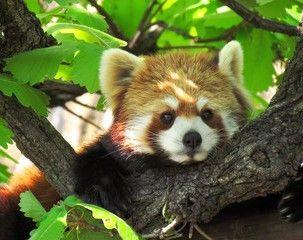 ... Panda decorations on Pinterest  Panda party, Panda birthday and Panda