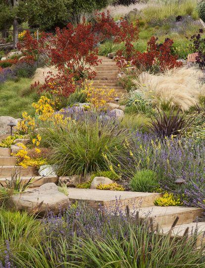 Native garden layout