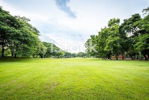 Beautiful park scene in public park with green grass field, green…