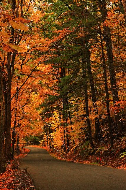 Fall road in Saugerties, Catskills Mountains, New York; photo by .Roger C. Green