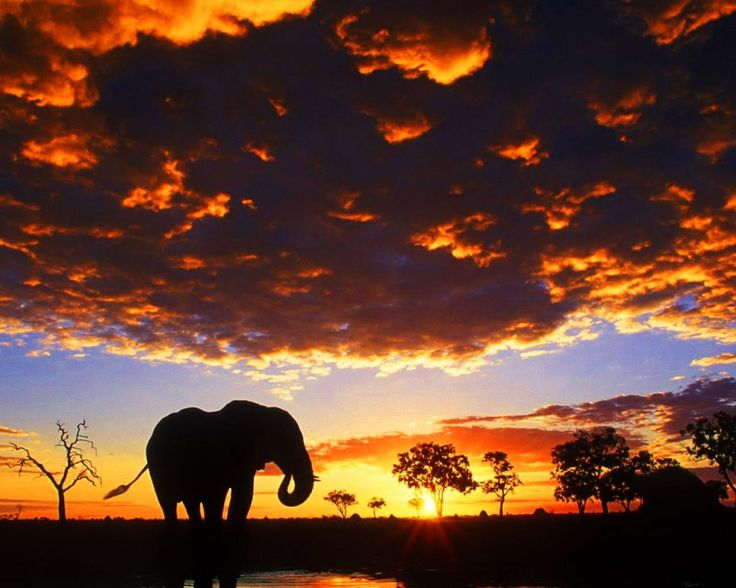 Reminds me of the elephant we seen in Uganda at sunset. - Safari Tours Great Safaris Within Your Budget. Contact Us Today For More Details; Tel: +256 (0)312 260559, E: info@pearlofafricatours.com, Web: www.pearlofafricatours.com