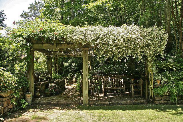 Pergola covered in confederate jasmine