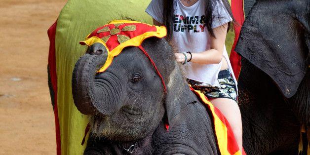 The 10 'Cruelest' Wildlife Tourism Attractions