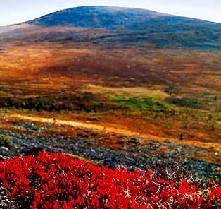 Ruska = autumn colors in Lapland, Finland