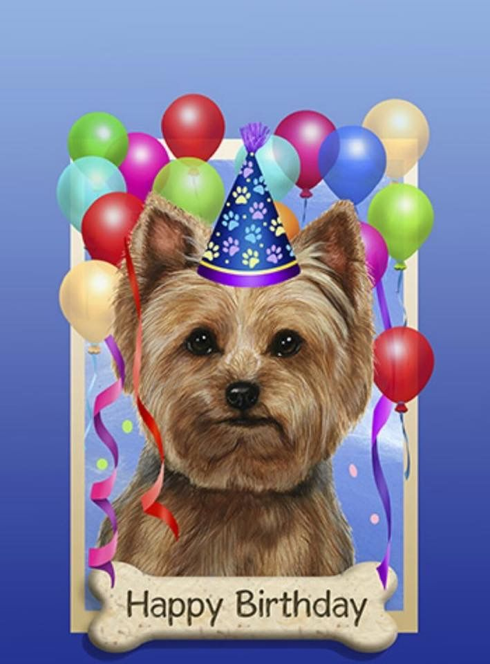 Надписи картинки, открытки с днем рождения йоркширский терьер