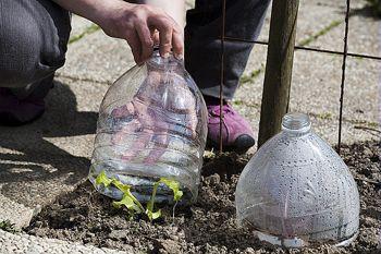Créer le matériel de semis avec de la récupération - Cloche ou mini-serre pour protéger et tenir au chaud les semis :