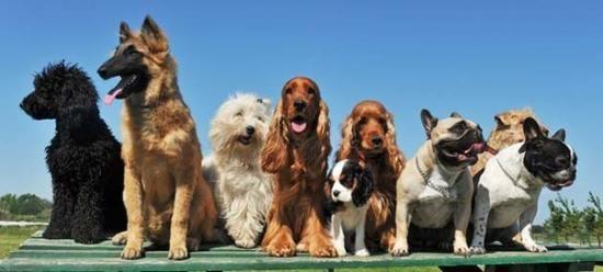 Köpekler Hakkında Bilmediğiniz 13 İlginç Bilgi !