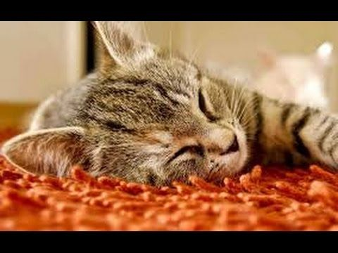 2 Hours of cat sleeping music- RELAXING MUSIC FOR CATS - 2 HORA GATO MÚSICA - RELAXING SOUNDS - YouTube